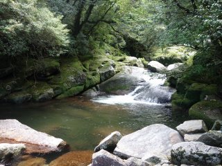 Une nature sauvage dans la forêt de Shiratani Unsuikyo