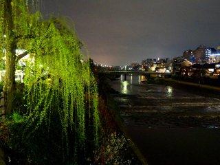 버드나무와 강