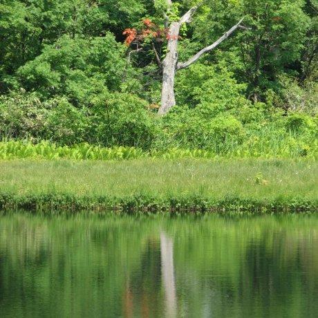 Kagami Numa Wetland Marsh