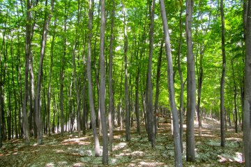 <p>A world no fantasy novel ever dreamed a up: a spring green forest rising out of the snow</p>