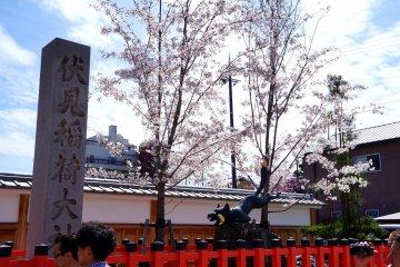 <p>첫번째 도리이 옆에 있는 벼이삭을 물고 있는 여우상, 그리고 벚꽃</p>