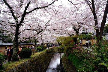 <p>아름다운 테츠가쿠노미치</p>