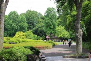 新緑の季節。自然林とつつじ山の間を通って、大芝生広場へ