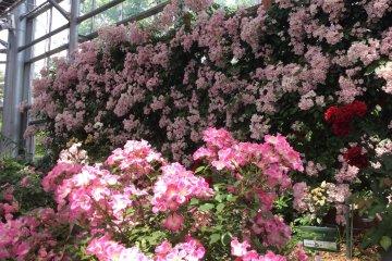 <p>สวนที่ออกแบบมาอย่างดีแห่งนี้ กำลังบานกันเต็มที่ อวดสีสันที่สวยงาม</p>