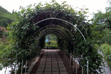 The longest rose arch