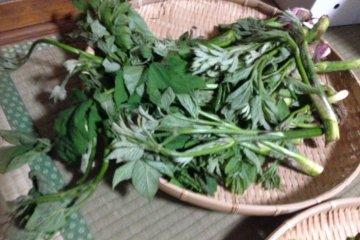 <p>Freshly picked mountain vegetables.</p>