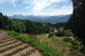 <p>While standing near a rice field and talking with a farmer, I was able to see the mountains.</p>