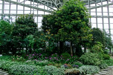 <p>Green shrubbery gives the feeling of warmth even on a cold day in Akita.</p>