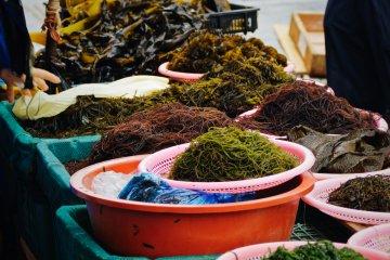 <p>Many colourful varieties of fresh seaweeds</p>