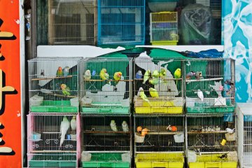 <p>One on Busan&#39;s multitude of pet stores</p>
