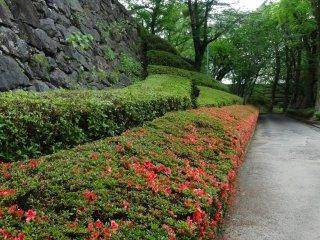 Azalea bushes line the walking paths inside the castle walls