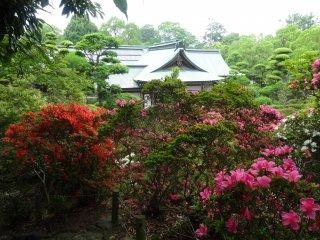 A proliferation of azalea bushes rings the shrine
