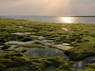 Okinawa's Emerald Beach, in Ocean Expo Park, is approximately 14.8 acres.