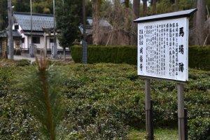 城福寺の馬場跡。かつて越前福井松平藩主が参詣の折に馬をつないだ場所だ。今は茶畑となっている。