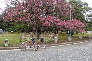 ถ้าคุณชอบปั่นจักรยาน ก็จะเป็นวิธีที่ดีในการเที่ยวชมสวนซึ่งมีพื้นที่กว้างใหญ่ และสถานที่โดยรอบ