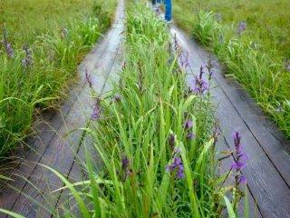 Berbagai jenis bunga bisa ditemukan di sepanjang jalur hiking di sini