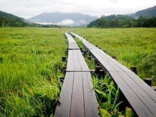 Всю дорогу - зеленый пейзаж