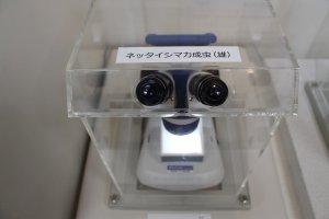 Quelques microscopes sont mis à disposition au rez-de-chaussée, et permettent d'observer de près des parasites tels que les moustiques