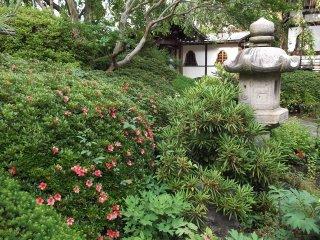 There are big azalea bushes in the garden