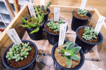 <p>Little succulents available for purchase&nbsp;</p>