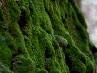 The moss on the trees and gravestones is incredible.