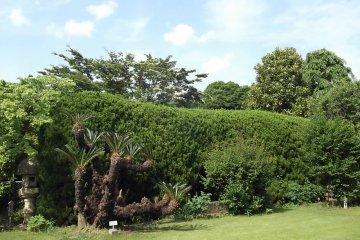 <p>Part of the upper garden</p>