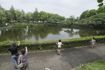 <p>On this Saturday afternoon, families with young and old came to spend an idyllic&nbsp;afternoon at&nbsp;Kanuma&nbsp;Park.</p>