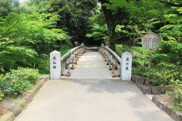 <p>A fusion of elegant nature and an elegant bridge built by man</p>