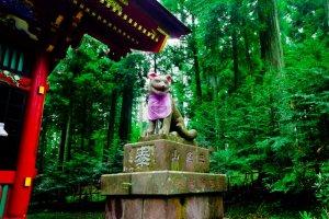 祀られている日本オオカミは、現代では全滅したと言われている。