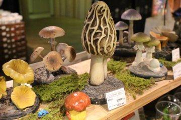 <p>科学館内的蘑菇</p>