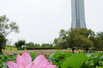 <p>Although it is a nice park year-round, visit Kodaihasu-no-Sato from June to August when the lotus flowers bloom.</p>