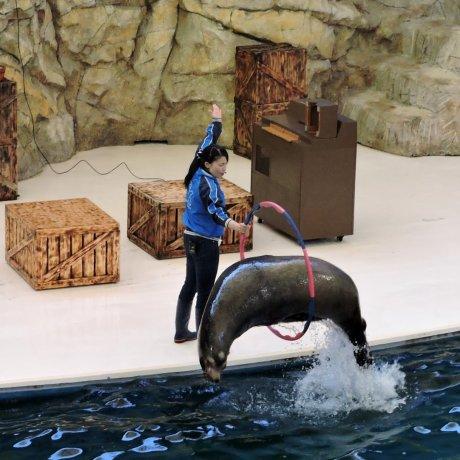 Sea Mammals at Toba Aquarium