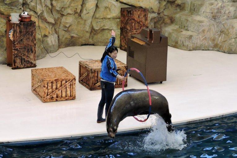 Морские млекопитающие в Аквариуме Тоба