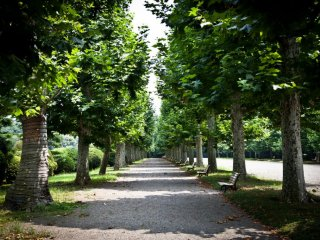 Sycamore trees line the perimeters of the French garden