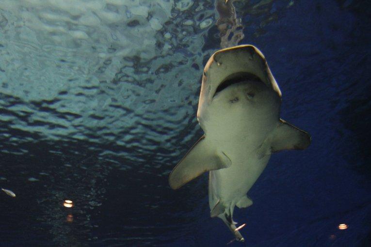 Морской парк Окинавы и аквариум