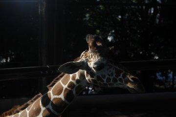 Nogeyama Zoo in Yokohama