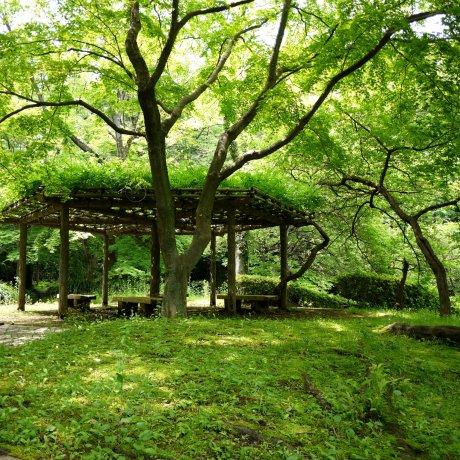 Peaceful Serigaya Park