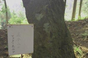 和みポイントの「高水山のマッターホルン」。