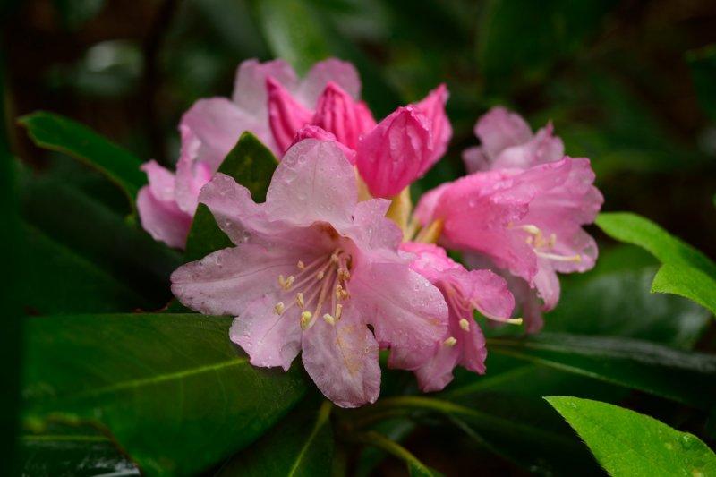 <p>Flowers in the garden</p>
