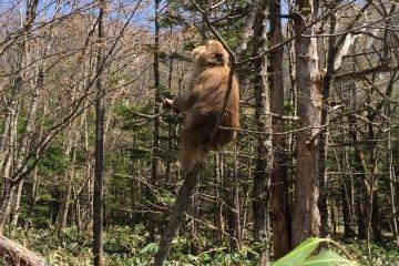 <p>上高地树林里经常可以看见不怕生的猴子</p>