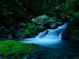 滝の水は小川となって森を流れる