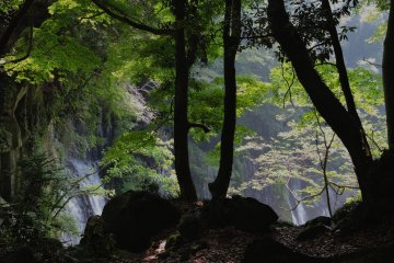 <p>First glimpse of Shiraito Falls</p>