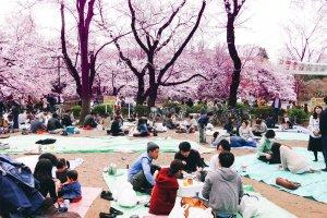 3월의 벚꽃축제 하나미