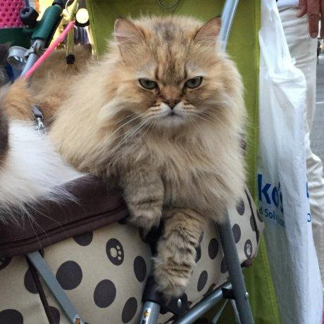 A Cat Guy in Omotesando
