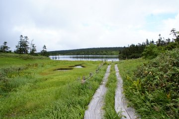 <p>A hiking trail leads through the marshland near Onuma Pond</p>