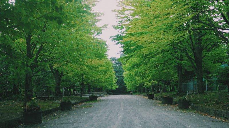 <p>Hirosaki Park will make you calm.</p>