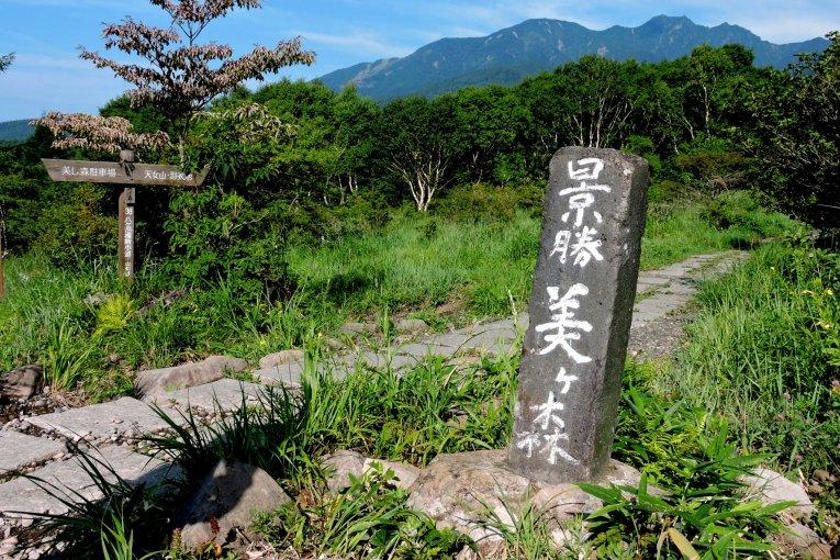 Hoa dại và khung cảnh núi non
