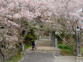 A entrada para o templo é decorada, durante a primavera, pelas flores das cerejeiras (templo nº 14)