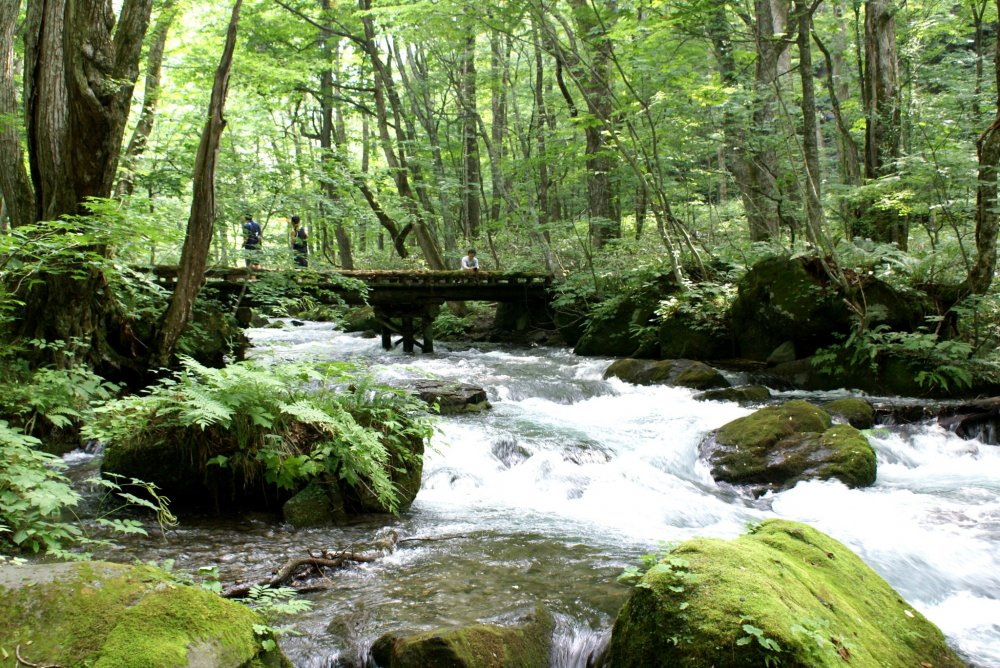 Sebuah jembatan melintasi jeram Oirase di Aomori