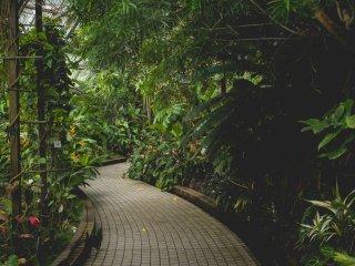 Taman tropis basah